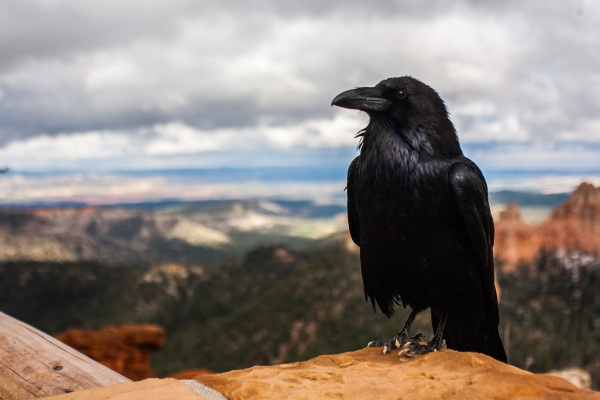 Crowbar – the device that want to turn crows into garbagemen