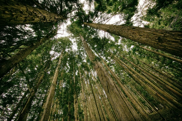 Ecosia – plant trees by surfing the web