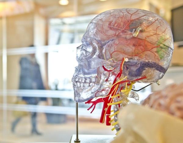 Nectome – preserve your brain for the future