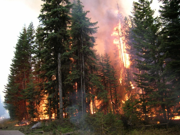 Disturbances In the Forest – catastrophic events release carbon