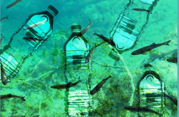 Plastic is Finding Its Way Everywhere – bottles washed up on remote island in the Atlantic