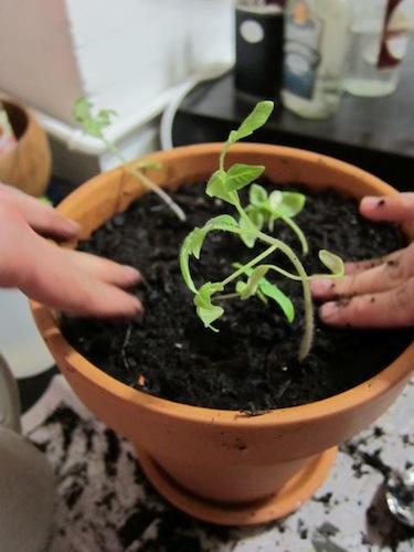 Sunday Snapshot: Companion Planting | Red-Handled Scissors