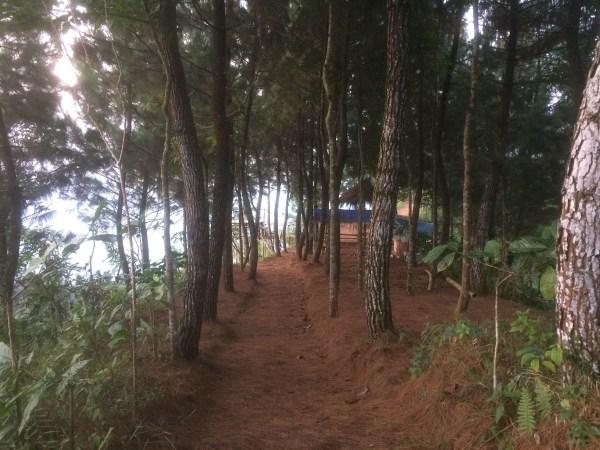 Kebun Pinus di Gunung Beser cocok untuk berkemah