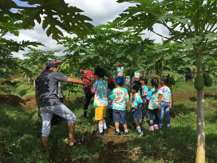 belajar pertanian bersama anak anak TK