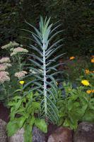 Unkraut   Seite 1   Pflanzenfragen   Mein schöner Garten ...