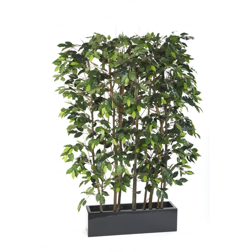 Artificial Ficus Screen Office Or Restaurant Plants For