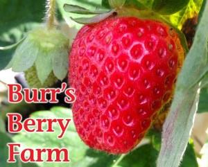 Burr's Berry Farm