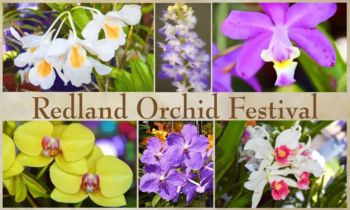 Redland Orchid Festival