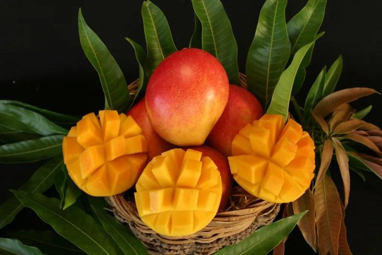 Mango Tasting