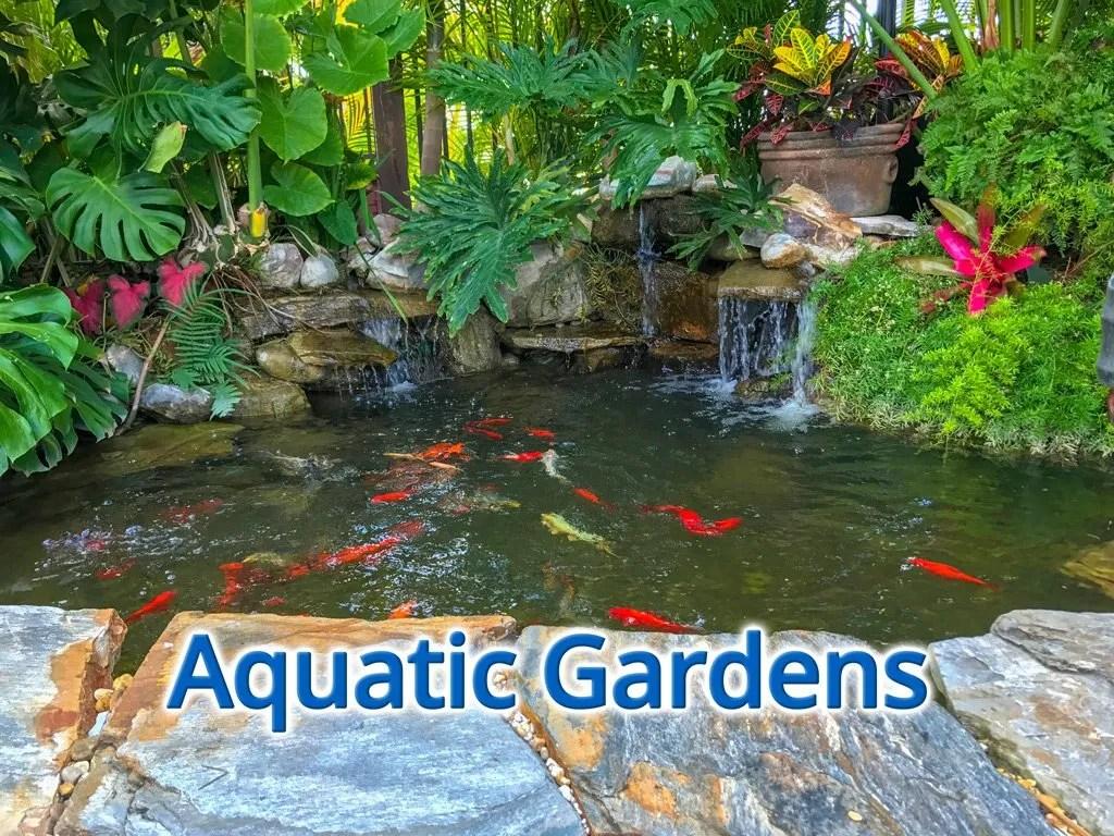 aqautic gardens