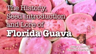 Florida Guava History