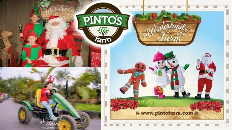 Pinto's Farm - family fun in the Redland