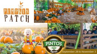 Pumpkin Patch at Pinto's Farm