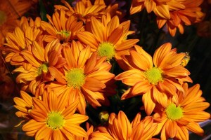 Orange Flowers by Jan Hebel