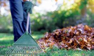 Leaf raking.
