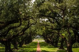oak-alley
