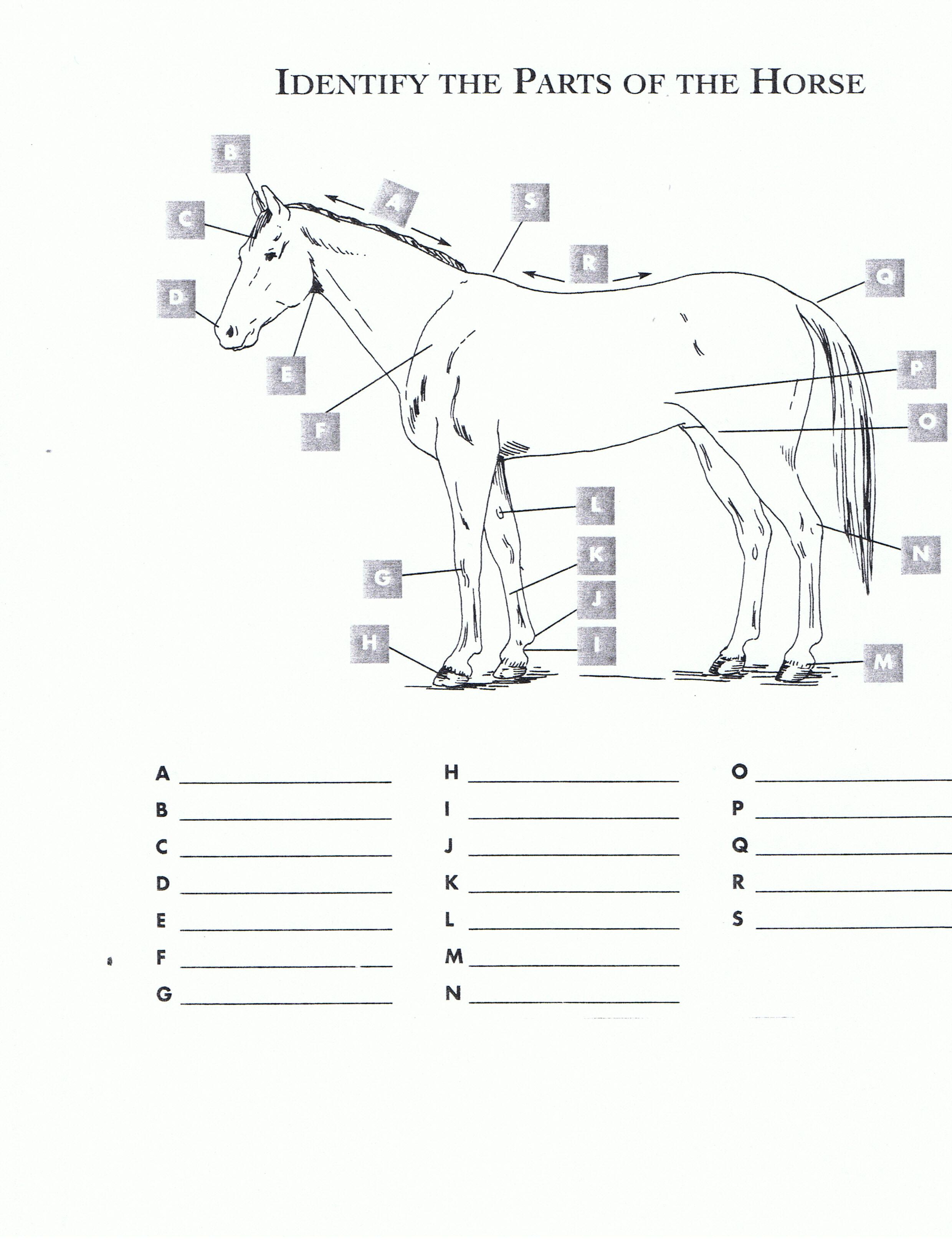 4 H Horse Worksheet Printable