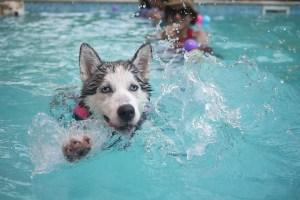 dog_in_pool