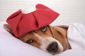 My Dog Has Diarrhea. What Do I Do?
