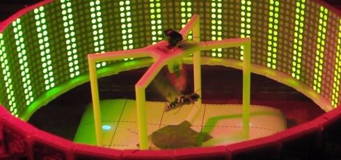 Analysis Of Moth Flight-Mechanics Could Result In Development Of Biobot Drones