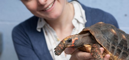 Tortoises Trained To Use Touchscreen As Part Of Spatial Navigation Study