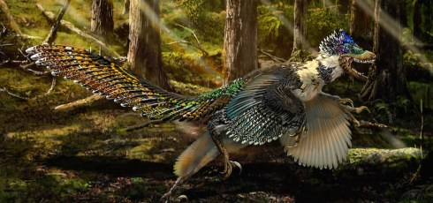 Velociraptor cousin had flamboyant wings, tiny arms