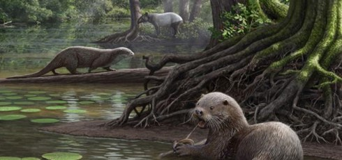 New wolf-sized species of ancient otter discovered in China