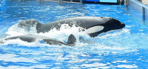 Tilikum the orca, star of Blackfish has died, SeaWorld confirms