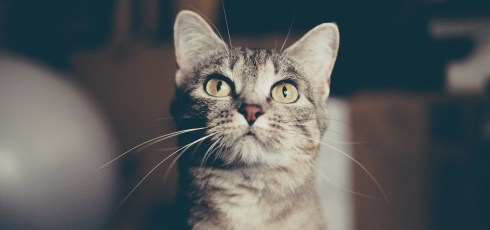 Ancient DNA reveals how cats domesticated humans