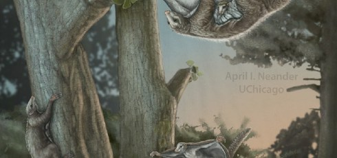 Researchers discover fossils of oldest-known 'winged' mammals