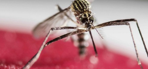 Scientists looking to weaponize the Zika virus against brain cancer