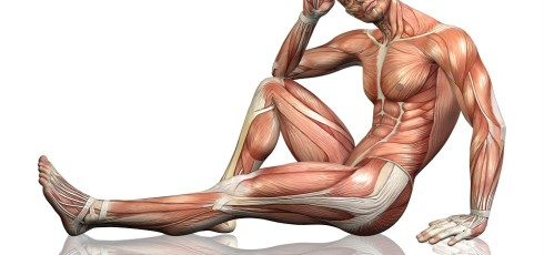 Difference Between Fast and Slow Twitch Muscle Fibers