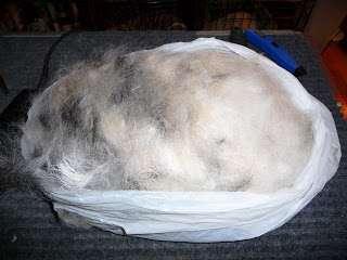 dog hair pile