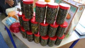 Pepinillos y Alcaparras cultivados en Monte Cristi