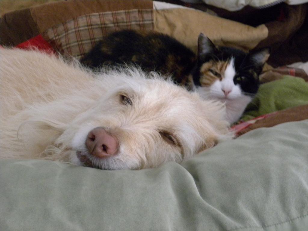 rrsas_dogsandcats1
