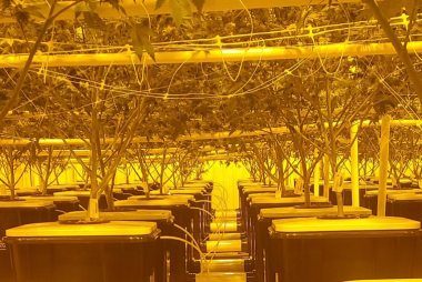 Deep Water Culture Style Grow