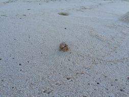 Besucher am Strand