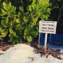 Bitte nicht stören: Hier ist ein Nest von Meeresschildkröten.