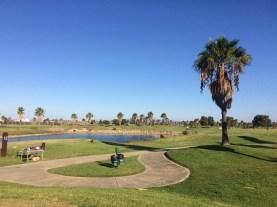 Golfen unter Palmen kann man auf dem Salgados GolfCourse