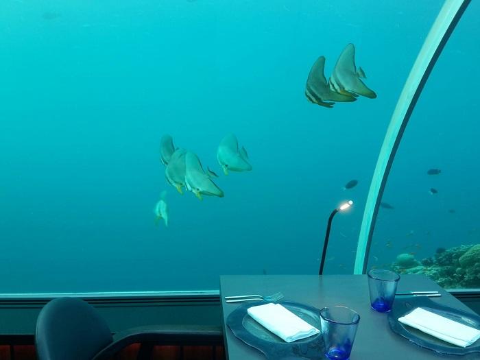 ... oder auf die faszinierende Unterwasserwelt... Am besten auf beides!