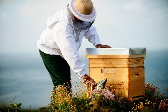 Guerlain macht sich für den Bienenschutz stark