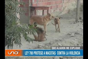 QUE ALGUIEN ME EXPLIQUE: CANES EN SITUACIÓN DE CALLE Y UNA LEY EN PIE