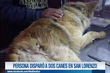 PERSONA DISPARÓ A DOS CANES EN SAN LORENZO