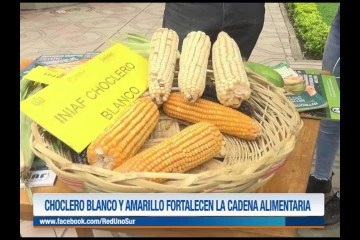 CHOCLERO BLANCO Y AMARILLO FORTALECEN LA CADENA ALIMENTARIA