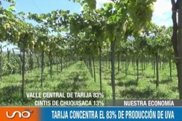 NUESTRA ECONOMÍA: TARIJA CONCENTRA EL 83% DE PRODUCCIÓN DE UVA