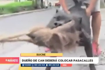 DUEÑO DE CAN DEBERÁ COLOCAR PASACALLES