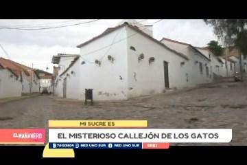 MI SUCRE ES: LOS CALLEJONES DE LOS GATOS