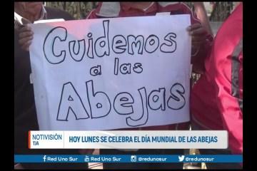 HOY LUNES SE CELEBRA EL DÍA MUNDIAL DE LAS ABEJAS