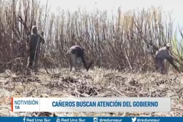 CAÑEROS BUSCAN ATENCIÓN DEL GOBIERNO