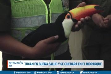 TUCÁN EN BUENA SALUD Y SE QUEDARÁ EN EL BIOPARQUE